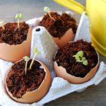 Pflanzen in Eierschalen