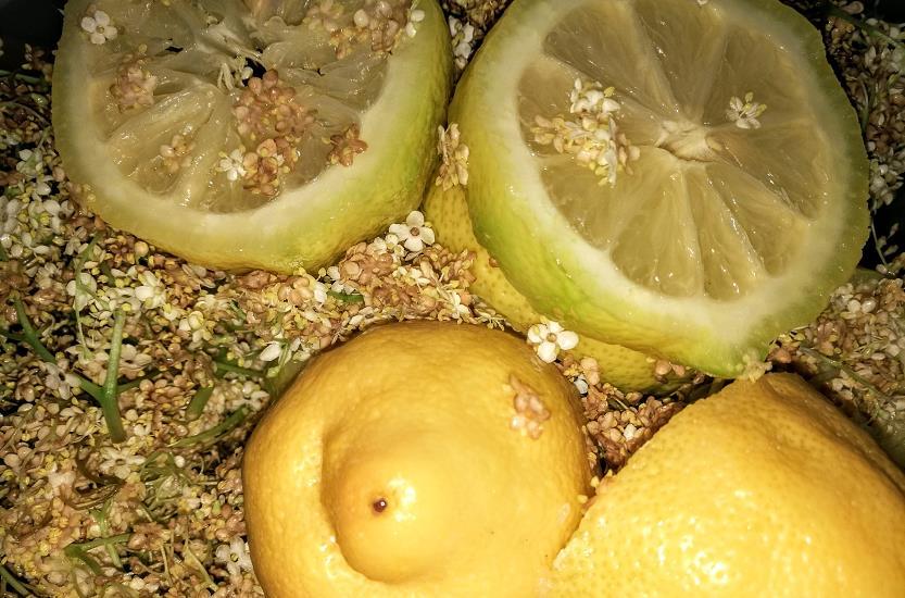 Zitronenschalten, Zitrusfüchte im Kompost