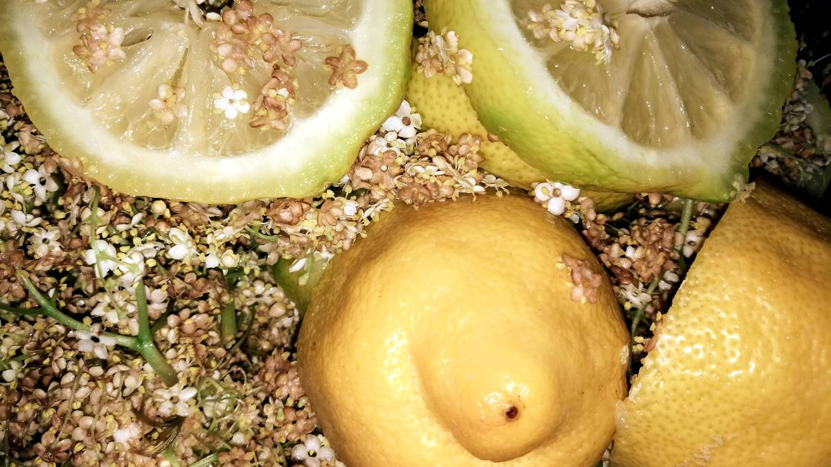 Schalen von Süd- und Zitrusfrüchen kompostieren